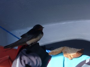Bird below on the boat.
